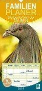 Die bunte Welt der Tauben (Wandkalender 2019 PRO_49_format hoch) - K. A. Calvendo