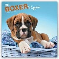 Boxer Puppies 2021 Square - Browntrout