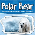 Polar Bear: Discover These Pictures And Facts Of Polar Bear For Kids - Bold Kids