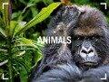 Animals 2018 -