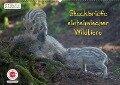 GEOclick Lernkalender: Steckbriefe einheimischer Wildtiere (Wandkalender 2018 DIN A2 quer) Dieser erfolgreiche Kalender wurde dieses Jahr mit gleichen Bildern und aktualisiertem Kalendarium wiederveröffentlicht. - Klaus Feske