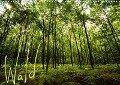 Wald (Wandkalender 2019 DIN A3 quer) - Frauke Gimpel