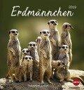 Erdmännchen 2019 Postkartenkalender -
