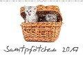 Samtpfötchen (Wandkalender 2017 DIN A3 quer) - HeschFoto