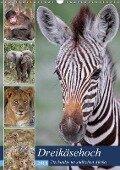 Dreikäsehoch - Tierkinder im südlichen Afrika (Wandkalender 2018 DIN A3 hoch) - Wibke Woyke