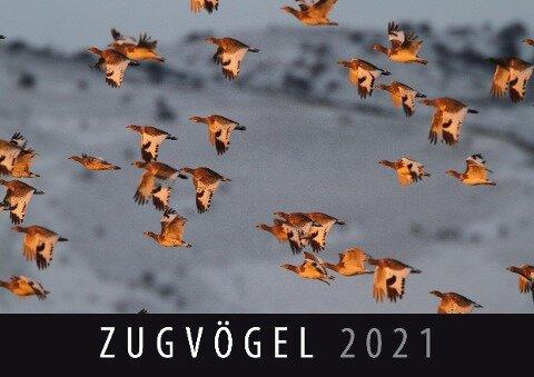 Zugvögel 2021 -