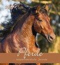 Pferde 2019 Postkartenkalender -
