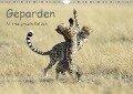 Geparden - Afrikas grazile Katzen (Wandkalender 2019 DIN A4 quer) - Thorsten Jürs