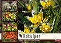 Wildtulpen - Liebenswerte Frühlingsboten (Wandkalender 2018 DIN A2 quer) Dieser erfolgreiche Kalender wurde dieses Jahr mit gleichen Bildern und aktualisiertem Kalendarium wiederveröffentlicht. - K. A. Lianem