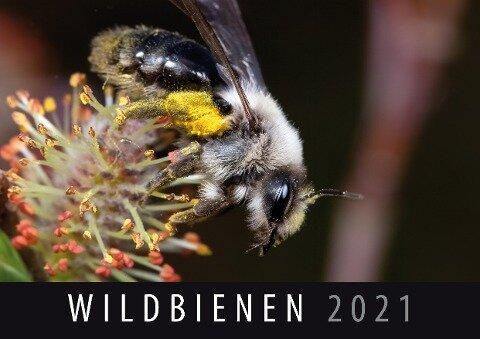 Wildbienen 2021 -