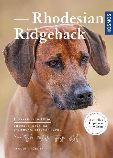 Rhodesian Ridgeback - Claudia Körner