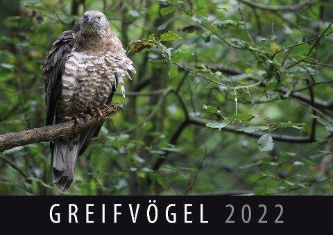 Greifvögel 2022 -