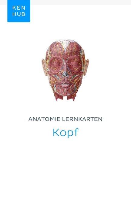 Anatomie Lernkarten: Kopf -