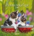 Schmusekatzen 2018. Postkartenkalender -