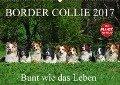 Border Collie 2017 (Wandkalender 2017 DIN A2 quer) - Sigrid Starick