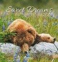 Sweet Dreams 2018 Postkartenkalender -
