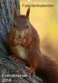 Eichhörnchen (Wandkalender 2018 DIN A3 hoch) - k. A. SchnelleWelten