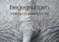 begegnungen - elefanten im südlichen afrika (Wandkalender 2019 DIN A3 quer) - K. A. Rsiemer