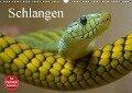 Schlangen (Wandkalender 2018 DIN A3 quer) Dieser erfolgreiche Kalender wurde dieses Jahr mit gleichen Bildern und aktualisiertem Kalendarium wiederveröffentlicht. - Elisabeth Stanzer
