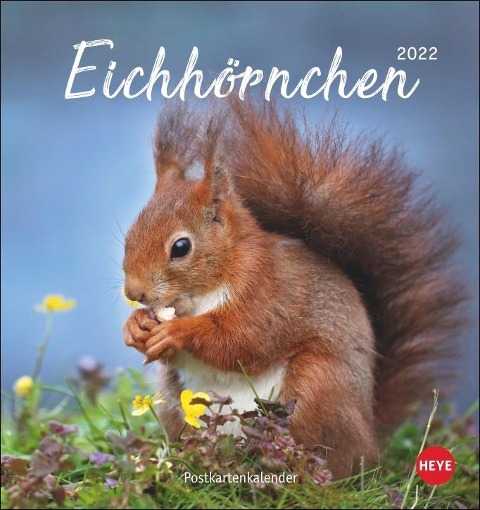 Eichhörnchen 2022 Postkartenkalender -