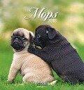 Mops 2018 Postkartenkalender -