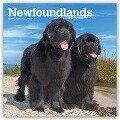 Newfoundlands - Neufundländer 2019 - 18-Monatskalender mit freier DogDays-App -