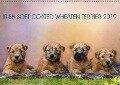 IRISH SOFT COATED WHEATEN TERRIER 2019 (Wandkalender 2019 DIN A2 quer) - Annett Mirsberger Www. Tierpfoto. De