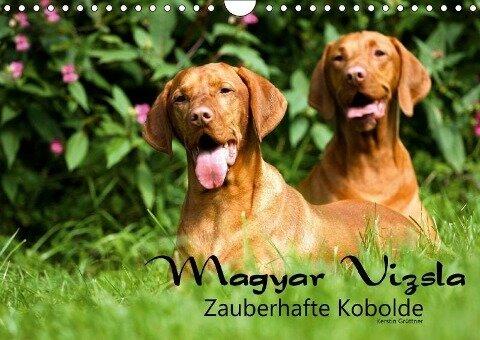 Magyar Vizsla - Zauberhafte Kobolde (Wandkalender 2019 DIN A4 quer) - Kerstin Grüttner