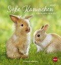 Süße Kaninchen 2019. Postkartenkalender -