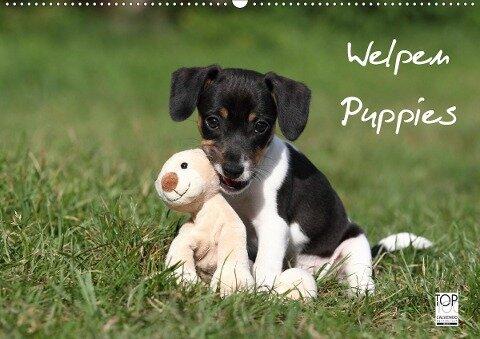 Welpen - Puppies (Wandkalender 2020 DIN A2 quer) - Jeanette Hutfluss