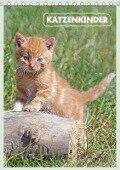 Katzenkinder (Tischkalender 2018 DIN A5 hoch) - Barbara Mielewczyk