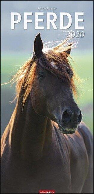 Pferde - Kalender 2020