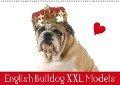 English Bulldog XXL Models (Wandkalender 2019 DIN A2 quer) - Elisabeth Stanzer