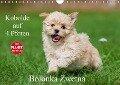 Kobolde auf 4 Pfoten - Bolonka Zwetna (Wandkalender 2017 DIN A4 quer) - Sigrid Starick