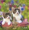 Schmusekatzen 2019. Postkartenkalender -