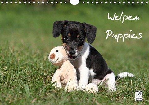 Welpen - Puppies (Wandkalender 2020 DIN A4 quer) - Jeanette Hutfluss