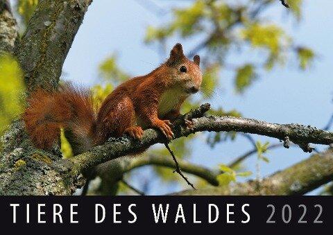 Tiere des Waldes 2022 -