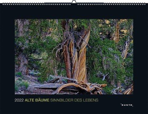 Alte Bäume - Sinnbilder des Lebens 2022 -
