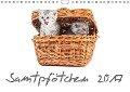 Samtpfötchen (Wandkalender 2017 DIN A4 quer) - HeschFoto