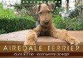 Airedale Terrier (Tischkalender 2018 DIN A5 quer) - Gaby Rottmann