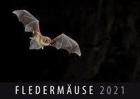 Fledermäuse 2021 -