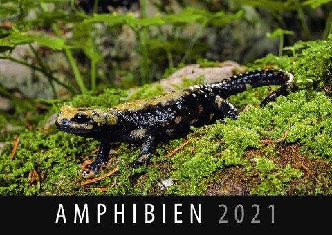 Amphibien 2021 -