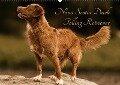 Nova Scotia Duck Tolling Retriever (Wandkalender 2018 DIN A2 quer) Dieser erfolgreiche Kalender wurde dieses Jahr mit gleichen Bildern und aktualisiertem Kalendarium wiederveröffentlicht. - Beatrice Müller Hundefotowerk
