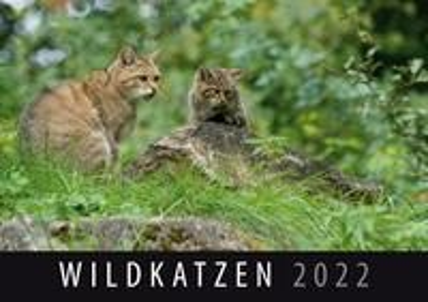 Wildkatzen 2022 -