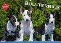 Bullterrier (Wandkalender 2018 DIN A2 quer) Dieser erfolgreiche Kalender wurde dieses Jahr mit gleichen Bildern und aktualisiertem Kalendarium wiederveröffentlicht. - K. A. Bullterrier