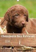 Chesapeake Bay Retriever 2018 (Wandkalender 2018 DIN A3 hoch) - k. A. Vika-Foto