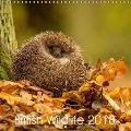 British Wildlife 2018 (Wall Calendar 2018 300 × 300 mm Square) - Mark Bridger
