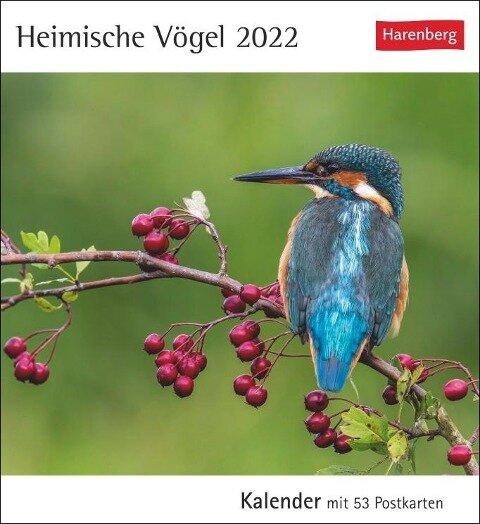 Heimische Vögel 2022 -