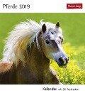 Pferde 2019. Kalender mit 53 Postkarten -