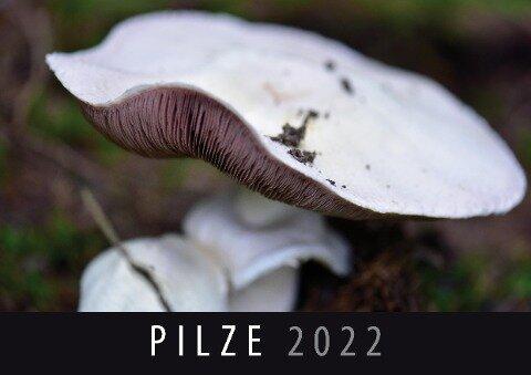 Pilze 2022 -